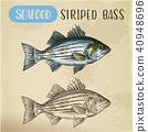 fish, sketch, vector 40948696