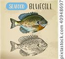 fish, sketch, vector 40948697