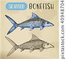 fish, sketch, vector 40948704