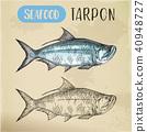 fish, sketch, vector 40948727