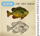 fish, sketch, vector 40948731
