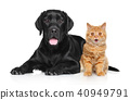 Happy Cat and Dog 40949791