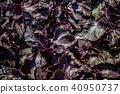 紫蘇 40950737