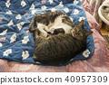 동반하는 고양이들 40957309