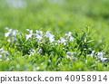 rosemary, herb, herbal 40958914