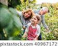 gardening, garden, senior 40967172