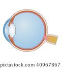 眼睛 目光 結構 40967867