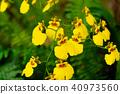 蘭花 花 開花 40973560