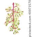 포도, 꽃, 플라워 40973570