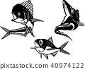 Black and white illustrations · Shiira, Tachibana, Kimmedai (vector) 40974122