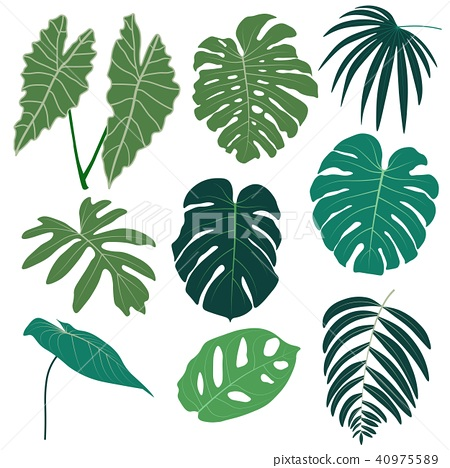 Vector set of tropical leaves. 40975589
