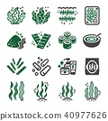 seaweed icon 40977626