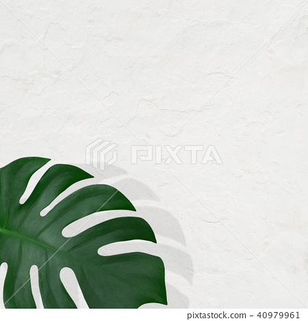 Background - Plants - White wall 40979961