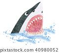 shark, ocean, sea 40980052