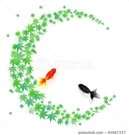 金鱼 红叶 鱼 40987357