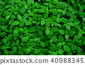 green leaf background and wallpaper 40988345