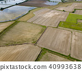 rice, fields, italy 40993638