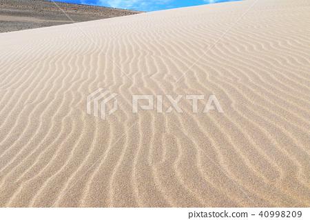 사막 (심판)의 풍문 (풍문) 사진 40998209