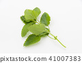 레몬 41007383