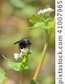 蟲子 漏洞 昆蟲 41007965