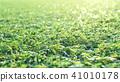 人造草皮 草地 草坪 41010178