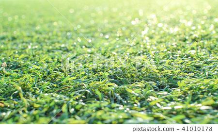 Artificial grass 41010178