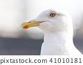 海鷗 鷗 鳥兒 41010181