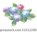 hydrangea bloom blossom 41012286