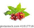 Red coffee beans on a branch of coffee tree 41017716