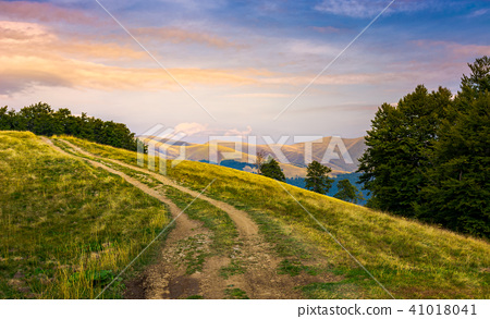 mountain road uphill in to the beech forest 41018041