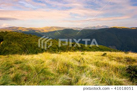 Grassy meadows of Svydovets ridge at sunset 41018051