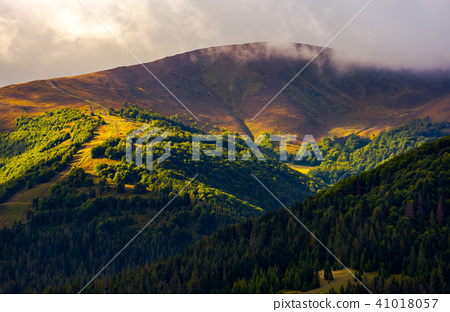 low clouds above the forested hill in sunlight 41018057