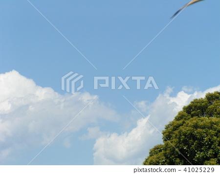blue sky, blue, white cloud 41025229