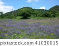 꽃, 플라워, 초원 41030015