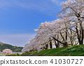 Hinoki Uchikawa櫻花 41030727