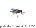 Macro photo of fly isolated on white background. 41031755
