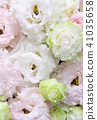 꽃이 터키 도라지 41035658