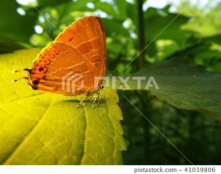 虫子 漏洞 昆虫 41039806