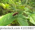 蟲子 漏洞 昆蟲 41039807