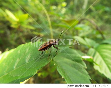 虫子 漏洞 昆虫 41039807