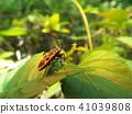 蟲子 漏洞 昆蟲 41039808