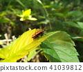 蟲子 漏洞 昆蟲 41039812