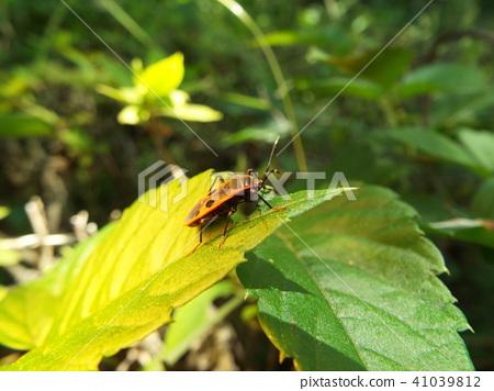 虫子 漏洞 昆虫 41039812