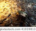 蟲子 漏洞 昆蟲 41039813