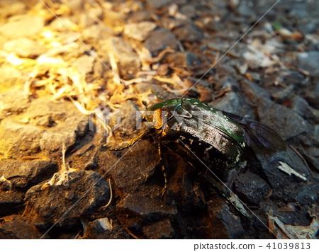 虫子 漏洞 昆虫 41039813