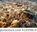 蟲子 漏洞 昆蟲 41039814