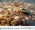 蟲子 漏洞 昆蟲 41039815