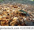 蟲子 漏洞 昆蟲 41039816