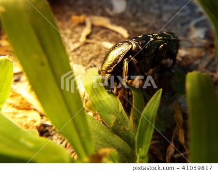 虫子 漏洞 昆虫 41039817