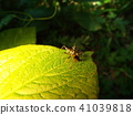蟲子 漏洞 昆蟲 41039818